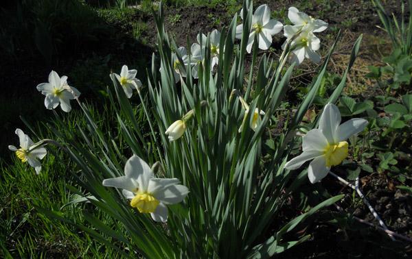 весна, женщины, март