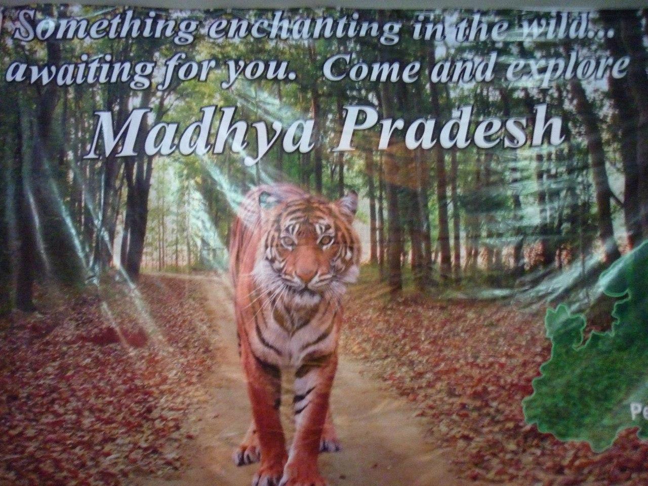 Индия. Дели. Тигр. Реклама