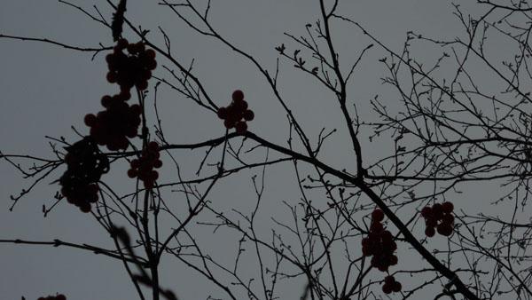 дни поздней осени бранят обыкновенно