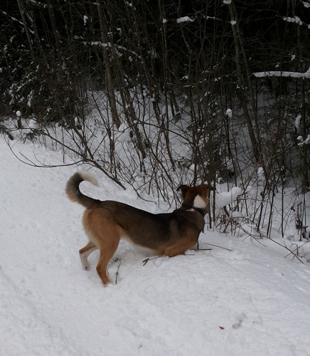 Пафос снежный