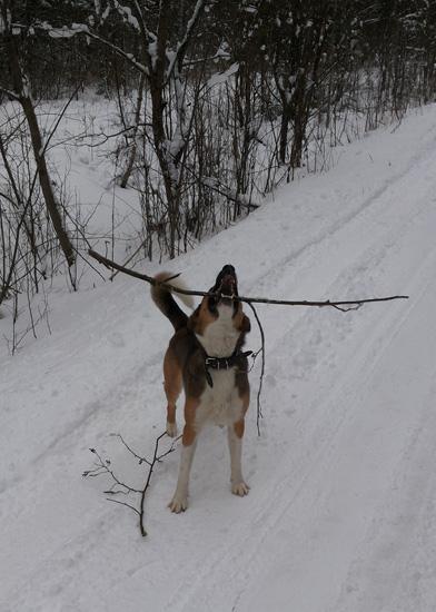 Пафнутий снежный