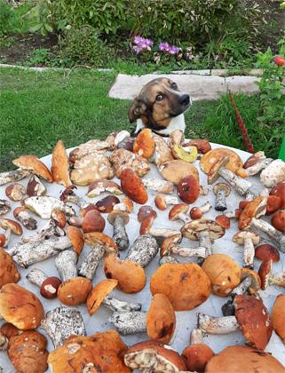 собака, пафос, грибы, времена года