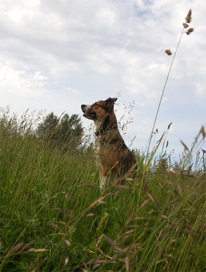 летний пафос пёс
