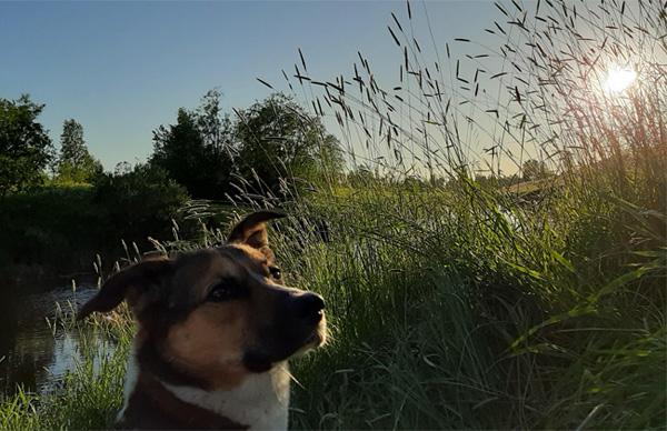 Поэма собаки