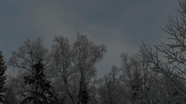 времена года, январь
