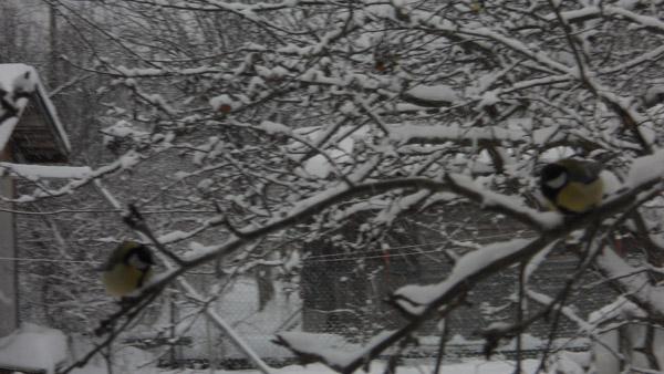 времена года, декабрь