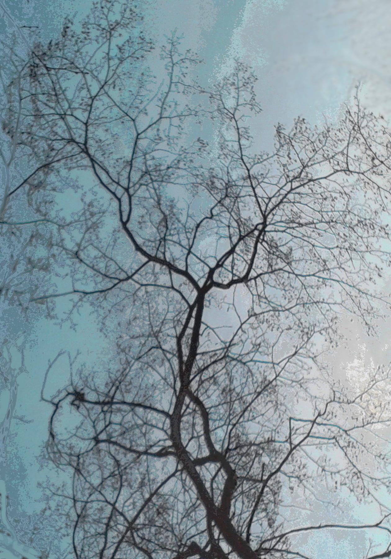 Вербное воскресенье, живые деревья